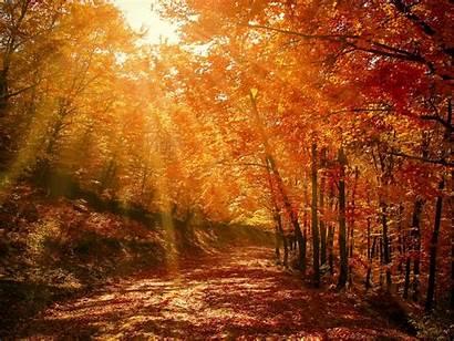 Forest Autumn Park Sunlight Foliage Nature Background
