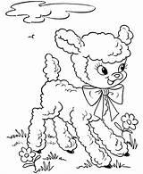Lamb Coloring Animals Kb sketch template