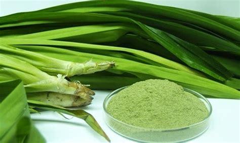 khasiat daun pandan wedang angkringan jogja angkringan jogja pusat produsen wedang uwuh