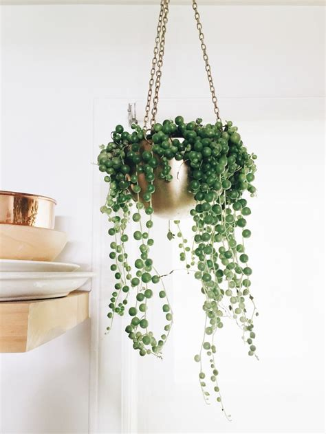 a strand of greenery hung as decoration 1000 ideas about indoor plant decor on plant decor indoor and black home