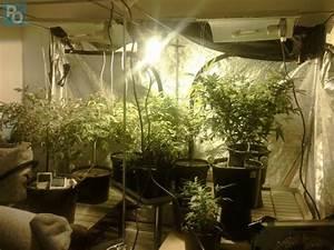 Loire atlantique il ne louait un appartement que pour y for Mini chambre de culture cannabis