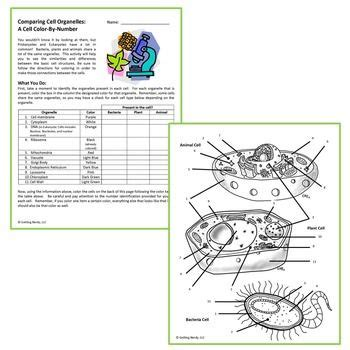 cells and their organelles coloring worksheet color of
