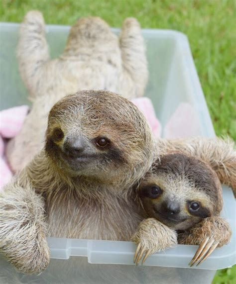 6 Sloth Facts You Need To Know First Choice Get Inspired