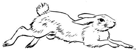springender hase  ausmalbild malvorlage tiere