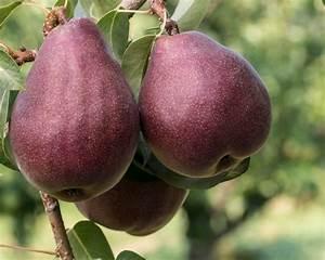 Fresh Pear & Gingerbread Crisp - Fresh From Oregon  Pear