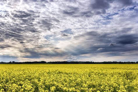 Free picture: crops, rural, sky, soil, summer, sun, weather, clouds