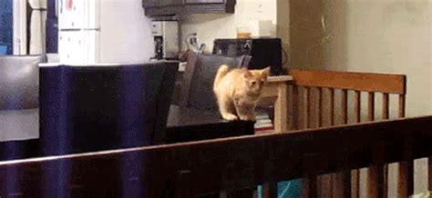 Cute Kitten Jump Fail