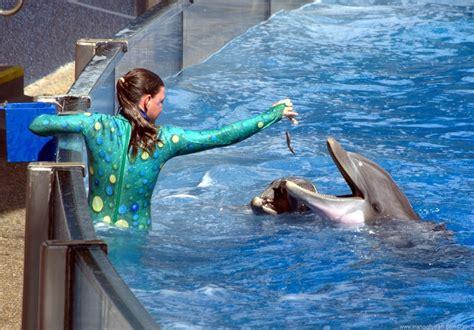 Trainer-feeding-dolphins-seaworld-orlando-florida-aeroplan