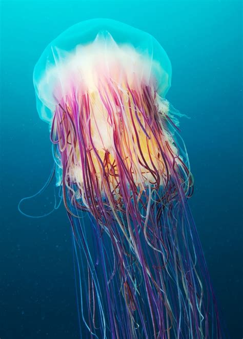 underwater jellyfish photography stunning underwater jellyfish photography by semenov Underwater Jellyfish Photography