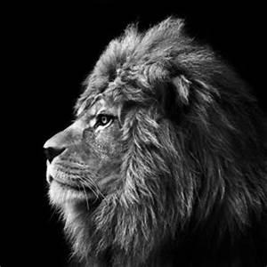 Tierbilder Schwarz Weiß : beeindruckende motive afrikanische tierbilder bei myposter ~ Markanthonyermac.com Haus und Dekorationen