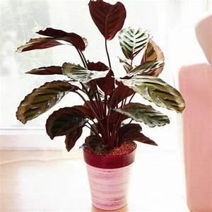 Plante Verte D Appartement : plante appartement liste ooreka ~ Premium-room.com Idées de Décoration