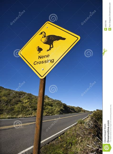 nene bird crossing sign royalty free stock image image