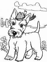 Scottish Terrier Colouring Dog Coloring Colorir Scottie Cachorrinhos Escoces Desenhos Adult Drawing Angus Dogs Scotty Sheets Disegno Cane Westie Familycorner sketch template