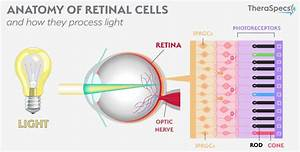 Why Light Hurts  The Pathophysiology And Causes Of