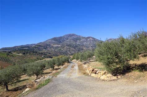 andalusian groves olive mountains track pista bahn olivenhaine polverosa bergen andalusische durch zu den through andalusia scenery ghiaia della montagne