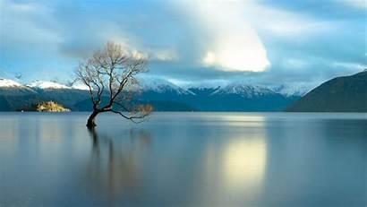 Zealand Wanaka Lake Tree Lone Famous Windows