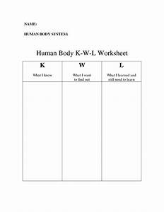 16 Best Images Of Muscle Worksheets For Middle School