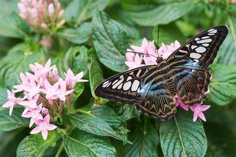 Botanischer Garten Augsburg Nacht Der Lichter by Schmetterlinge Im Botanischen Garten Augsburg Aus Licht