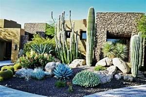 les 25 meilleures idees de la categorie amenagement With idee decoration jardin exterieur 11 cactus entretien arrossage et rempotage