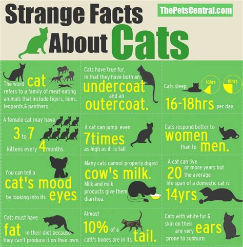 interesting facts  cats cristinas ideas