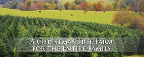 best nc christmas tree farm panoramic view tree farm in boone nc the home of the best tree