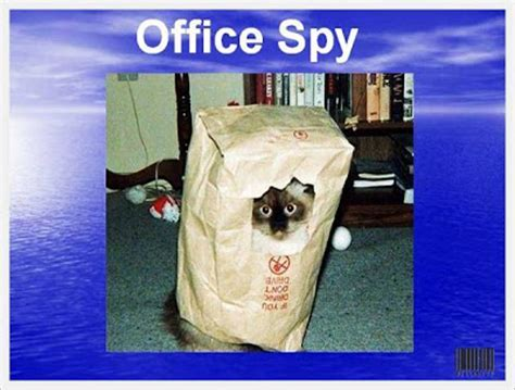 Funny Office Animals   Which one Are You? ? Funny Animals