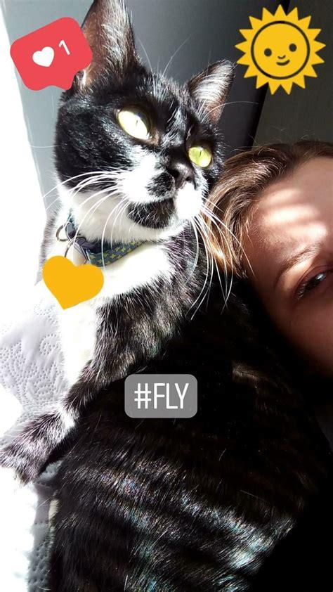 tuxedo fly gato nomes named cat