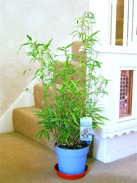 Easyplants  Traditional Evergreen Indoor Plant Garden