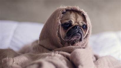 Funny Dog Puppy 4k Blanket Wrapped Wallpapers