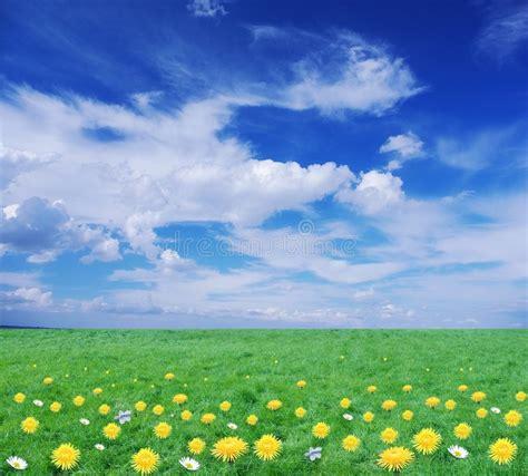 immagini prato fiorito prato fiorito fotografia stock immagine di bellezza