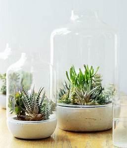 Deko Im Glas Ideen : sukkulente pflanzen unter der glashaube bild 6 living at home ~ Orissabook.com Haus und Dekorationen
