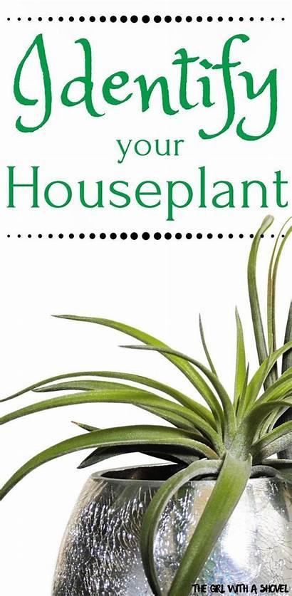 Plants Indoor Plant Identification Names Identifying Hanging