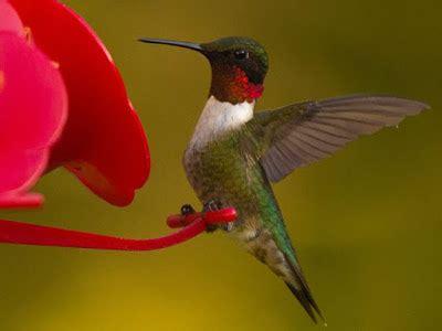 piedmont birding