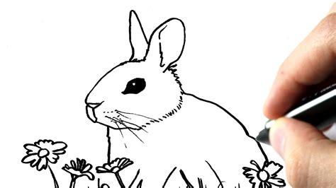 comment cuisiner un lapin comment dessiner un lapin