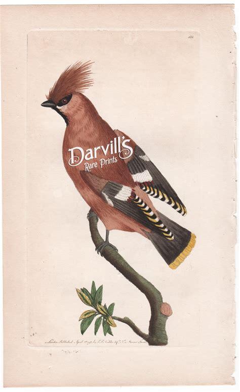shaw  nodder bird prints   naturalists