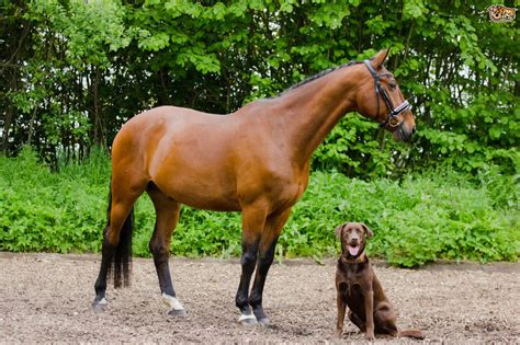 horses dogs around safe walk dog keep chasing cats pets4homes pet attacking prevent