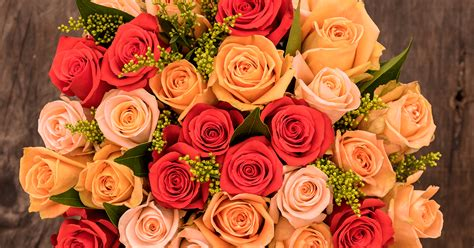 roses colors meaning colors and their meaning sense ecuador