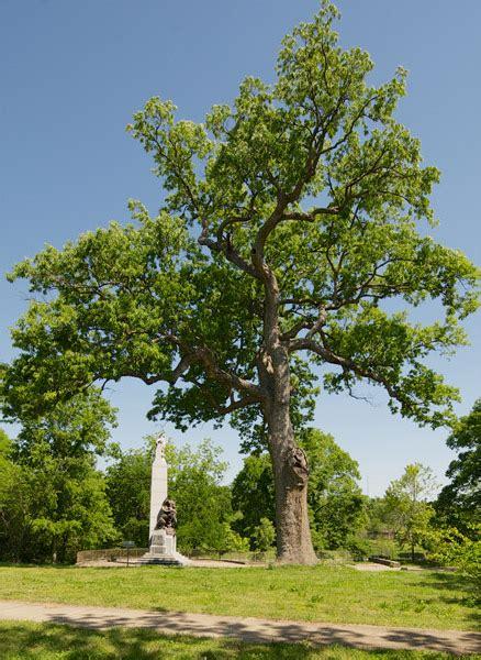 Nashville Tennessee Landschaft by Commercial And Residential Tree Service Serving Nashville