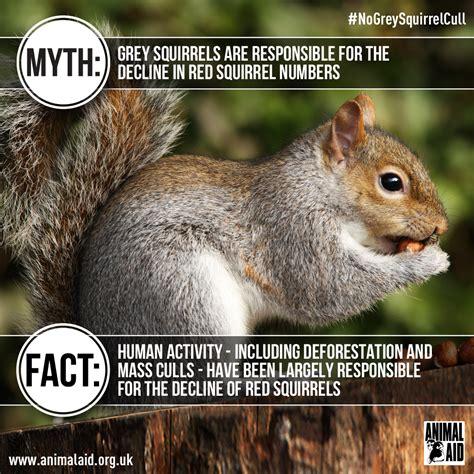speak   grey squirrels animal aid