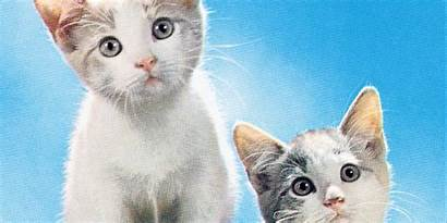 Cat Names Funny Adorable Kittens Cats Kitten