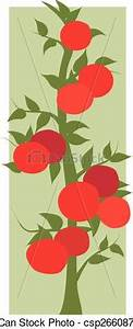 EPS Vector of Tomatoes on the vine - A tomato vine with a ...