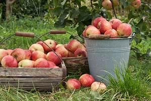 Wann äpfel Ernten : gartentipps im september nutzgarten gartenzauber ~ Lizthompson.info Haus und Dekorationen