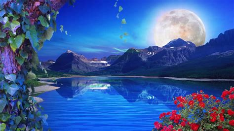 nature background loop  background hd  fps