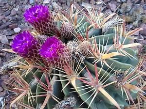 Desert Gardens | Homeschool Happymess: A Naturally ...