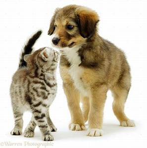 Cute Puppies And Kittens Playing Together Kitten Puppy ...