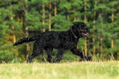 Großer, böser, schwarzer Hund  Sonstiger Talk rund um den