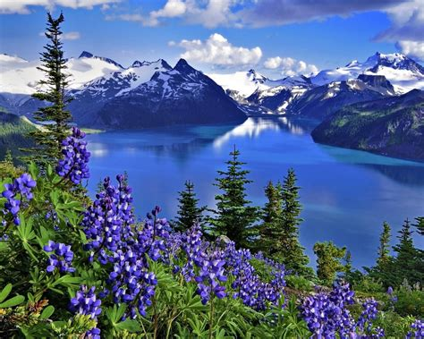 hd wallpaper landscape nature lake mountains flowers