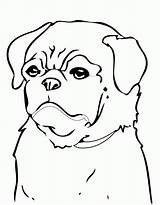 Pug Coloring Pages Dog Printable Puppy Dogs Beagle Minecraft Print Colouring Pugs Cute Drawing Cats Cool Christmas Breed Puppies Animals sketch template