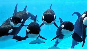 Petition  U00b7 Seaworld  Give Your Orcas What They Deserve