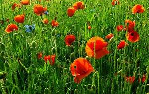 Blumen Für Sonnigen Standort : sommerblumen s en blumen seedballs bis ende juni ~ Michelbontemps.com Haus und Dekorationen